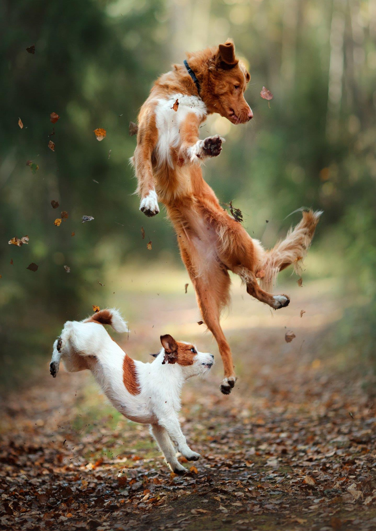 PlayStaytion Pet Resort and Training